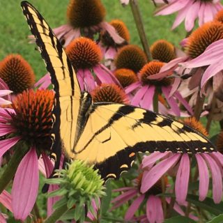 Wordless Wednesday – Butterfly